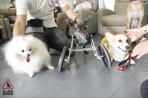 Qian Qian Therapy Dog 5