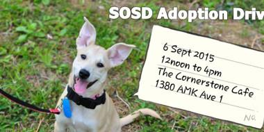 AdoptionDrive060915