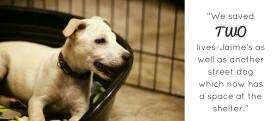 jamie adoption story