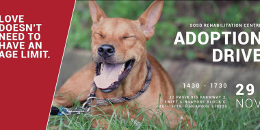 Adoption Drive at SRC 291115