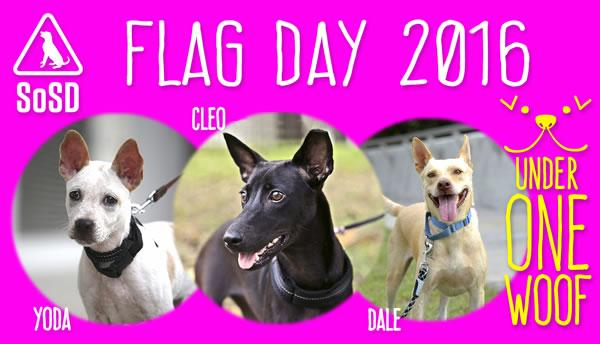 SOSD Flag Day 2016 2