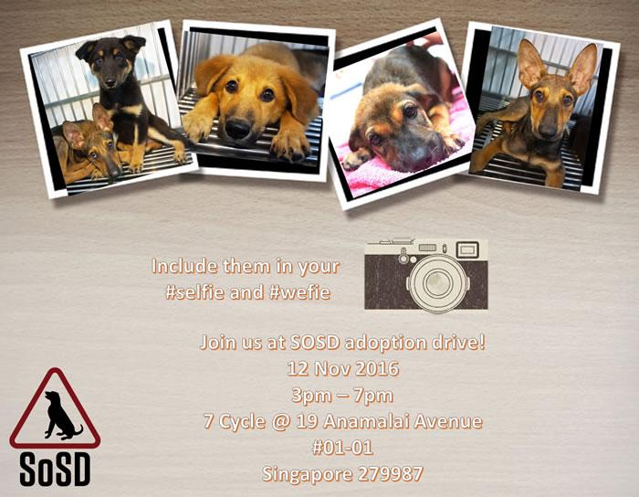 Adoption Drive 121116