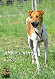 News Zoey7