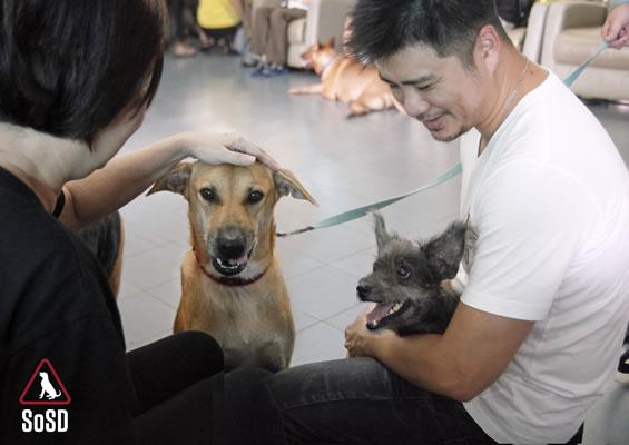 Qian Qian Therapy Dog 10