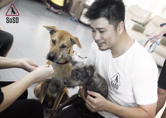 Qian Qian Therapy Dog 10b