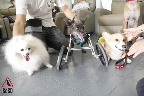 Qian Qian Therapy Dog 5