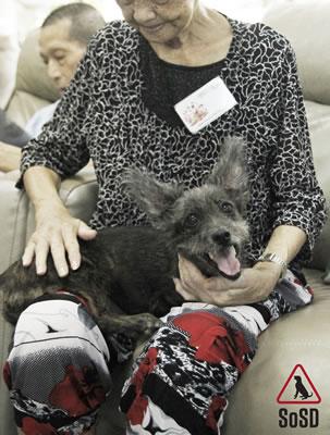 Qian Qian Therapy Dog 8