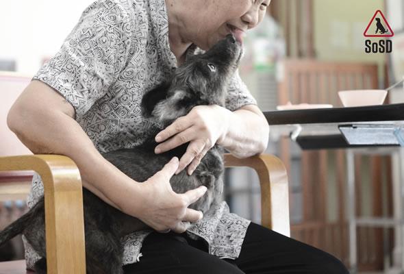 Qian Qian Therapy Dog 9b