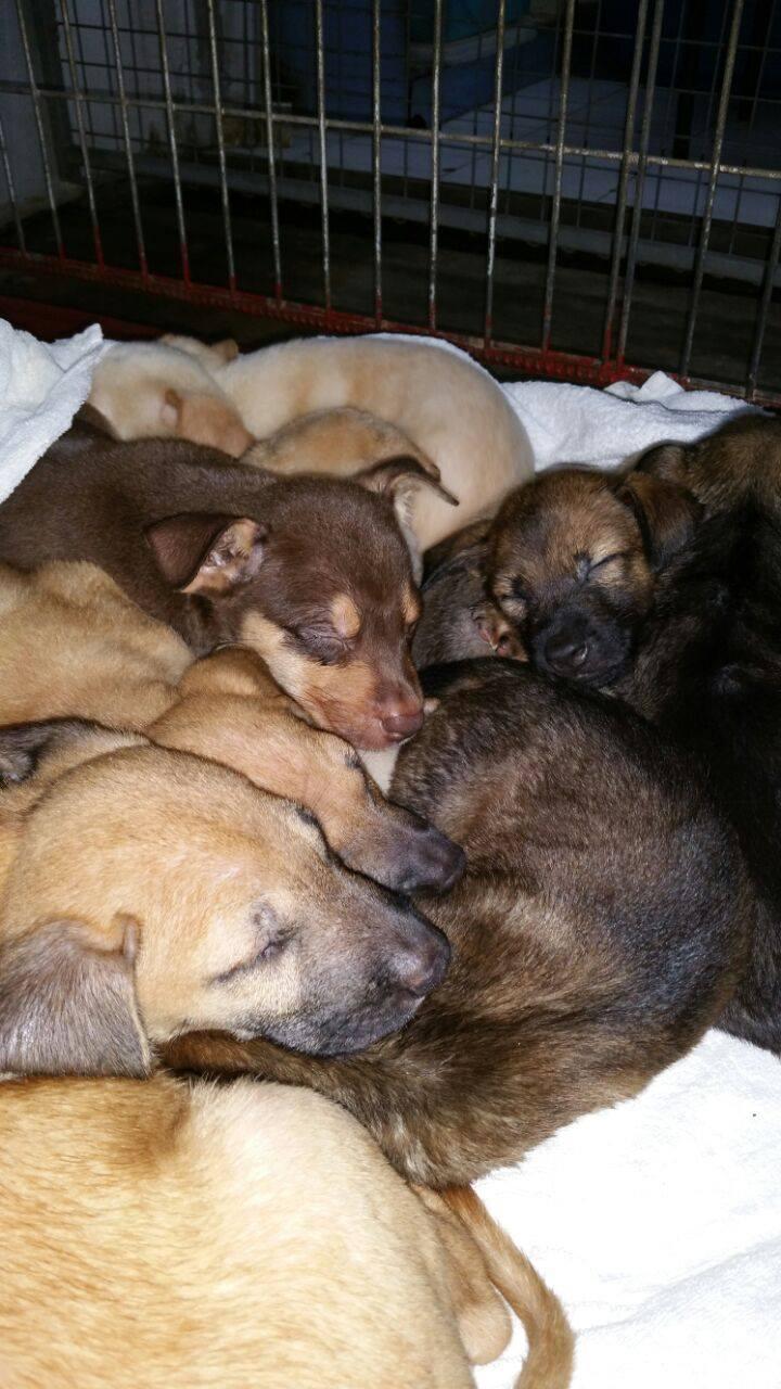 Tuas Puppies