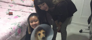 Jocelin, Merry's adopter
