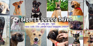 Biggest Puppy Drive 240716