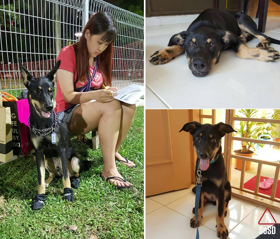 Archer's adopter Miao Xuan