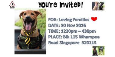 Adoption Drive 201116
