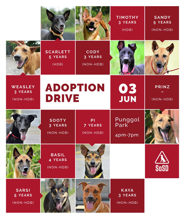 Adoption Drive 030617