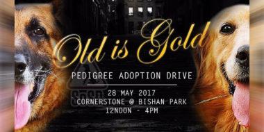 Adoption Drive 280517 Banner