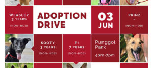 Adoption Drive 030617 Banner