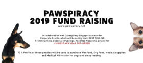 Chinese New Year goodies from Pawspiracy 100119 Banner
