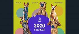 SOSD 2020 Calendars Banner